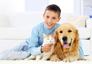 pet-urine-carpet-cleaning-reno-sparks-nv